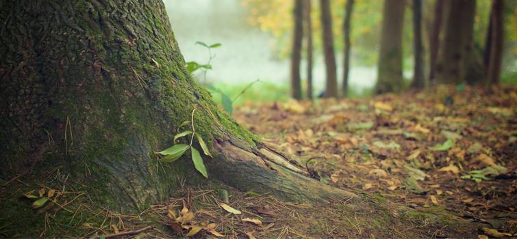 Podporujeme odpovědné lesnictví